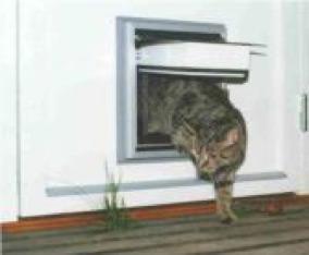 isolerad kattlucka och kattport